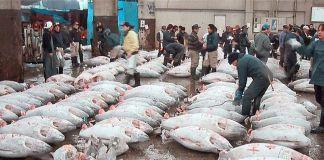 Subasta de atunes en el mercado Tsukiji de Tokio
