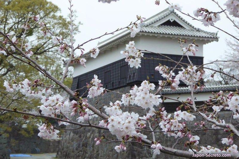bb4fa44c41 Lugares secretos y preciosos para ver cerezos en flor en Japón (hanami)