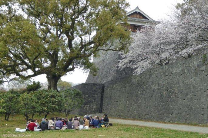 """Un inusual """"hanami"""" en los jardínes del castillo de Kumamoto"""
