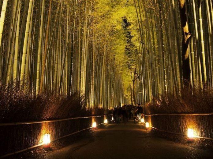 Festivales de Japón: el Arashiyama Hanatouro (嵐山花灯路) o iluminación de Arashiyama (Kioto) en diciembre, incluyendo el bosque de bambú