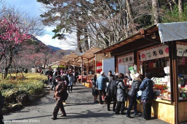 """Festivales de Japón: el El Atami Baien Ume Matsuri (熱海梅園梅まつり), uno de los más famosos festivales de ciruelos en flor de todo Japón (Atami, prefectura de Shizuoka). Puestos de comida o """"yatai"""""""