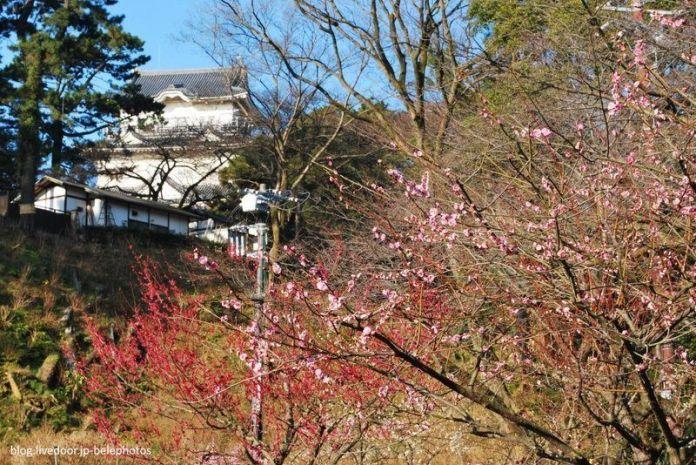 Festivales de Japón: el Odawara Ume Matsuri (小田原梅祭り) o Festival de los Ciruelos de Odawara. Castillo de Odawara
