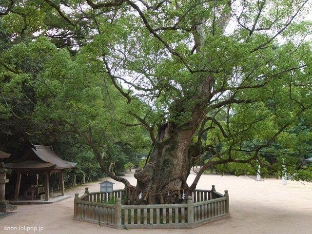 Festivales de Japón: el Ōyamazumi Jinja Reitaisai o Gran Festival del Santuario Ōyamazumi, celebrado en Imabari, en la isla de Omishima (mar interior Seto). Alcanforero del santuario Ōyamazumi