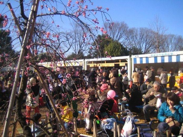 Festivales de Japón: el Setagaya Ume Matsuri (せたがや梅まつり) o Festival de los Ciruelos de Setagaya, en el parque Hanegi de Tokio