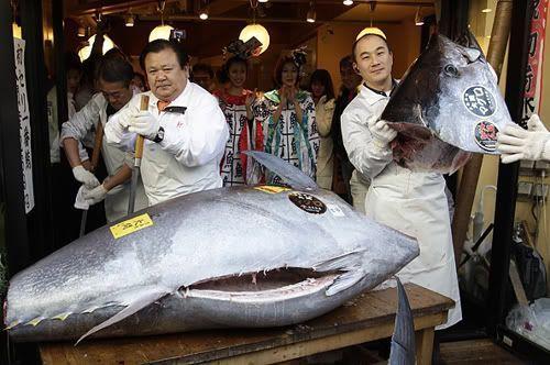 Ganadores de la subasta del primer atún del año (mercado Tsukuji, Tokio)