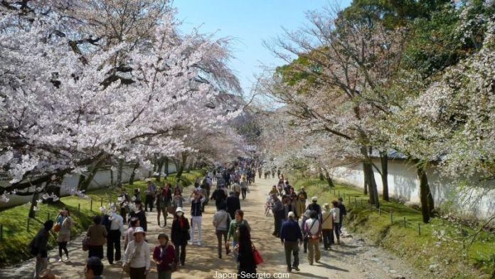 Jardines del templo Daigoji (Kioto) durante el florecimiento de los cerezos (sakura) en primavera