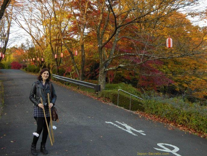 Festival Taimatsu Akashi: subiendo al monte Gorozan, cubierto de preciosos árboles con los colores del otoño (momiji/kouyou) con las antorchas