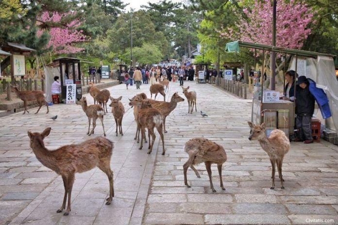 Viajar a Japón: excursión a Nara desde Osaka con guía en español. Foto del parque de Nara y sus famosos ciervos.