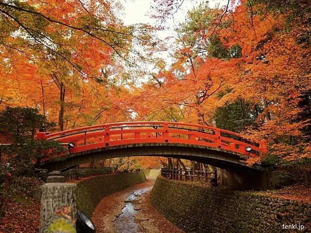 Japón: disfrutar del momiji en Kioto en otoño. Santuario Kitano Tenmangu