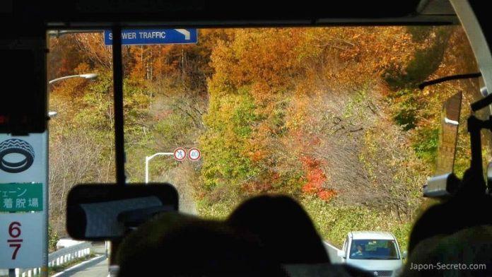 Vistas de los colores del otoño (momiji) desde el autobús camino de Kusatsu Onsen.