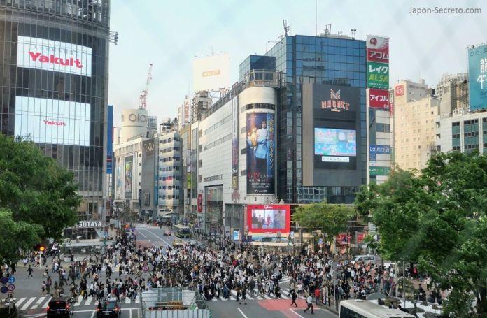 Vistas del cruce de Shibuya desde el corredor Shibuya Mark City. Tokio, que ver y hacer. Guia de viaje