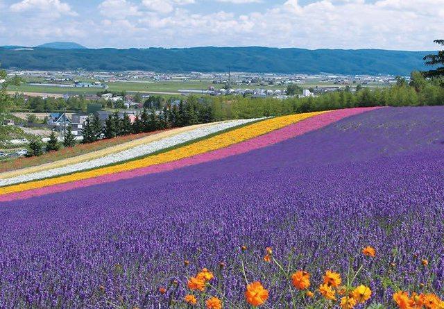 campo lavanda hokkaido furano