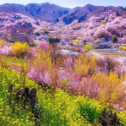 Hanamiyama Hill