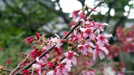 Ōfuna Kannon-sama (5)