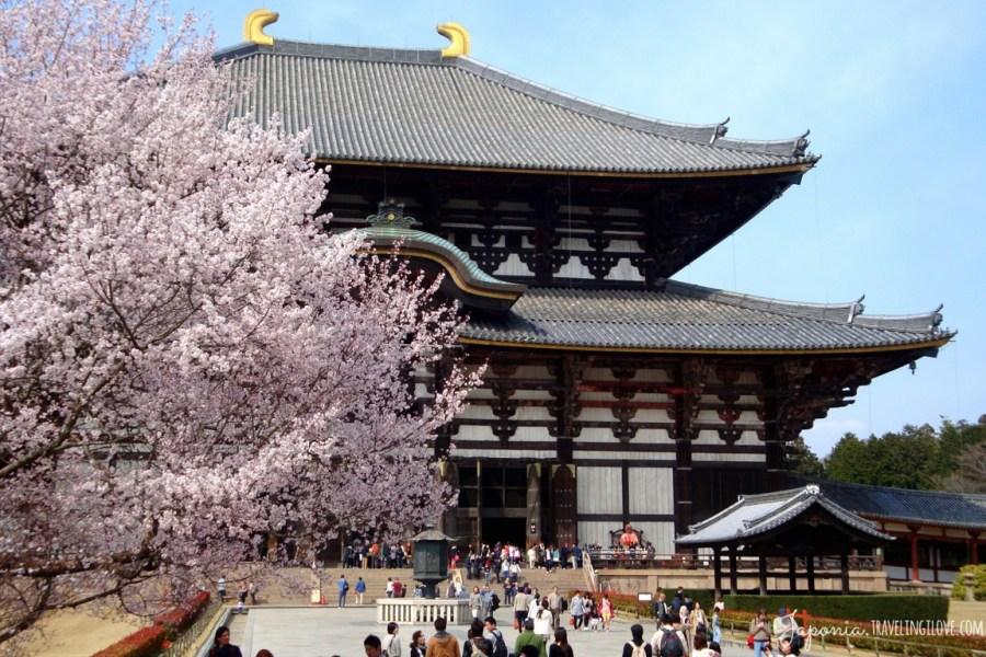 Tōdai-ji sakura