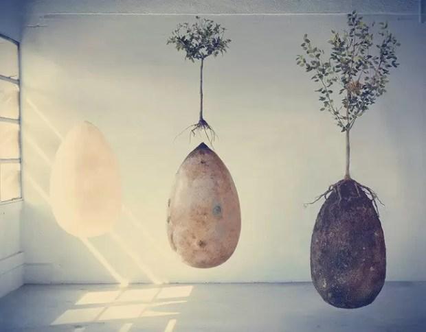 Um projeto inusitado pode converter pessoas em árvores