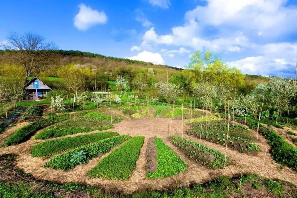 Estudos comprovam: Cultivar uma horta traz benefícios à saúde!