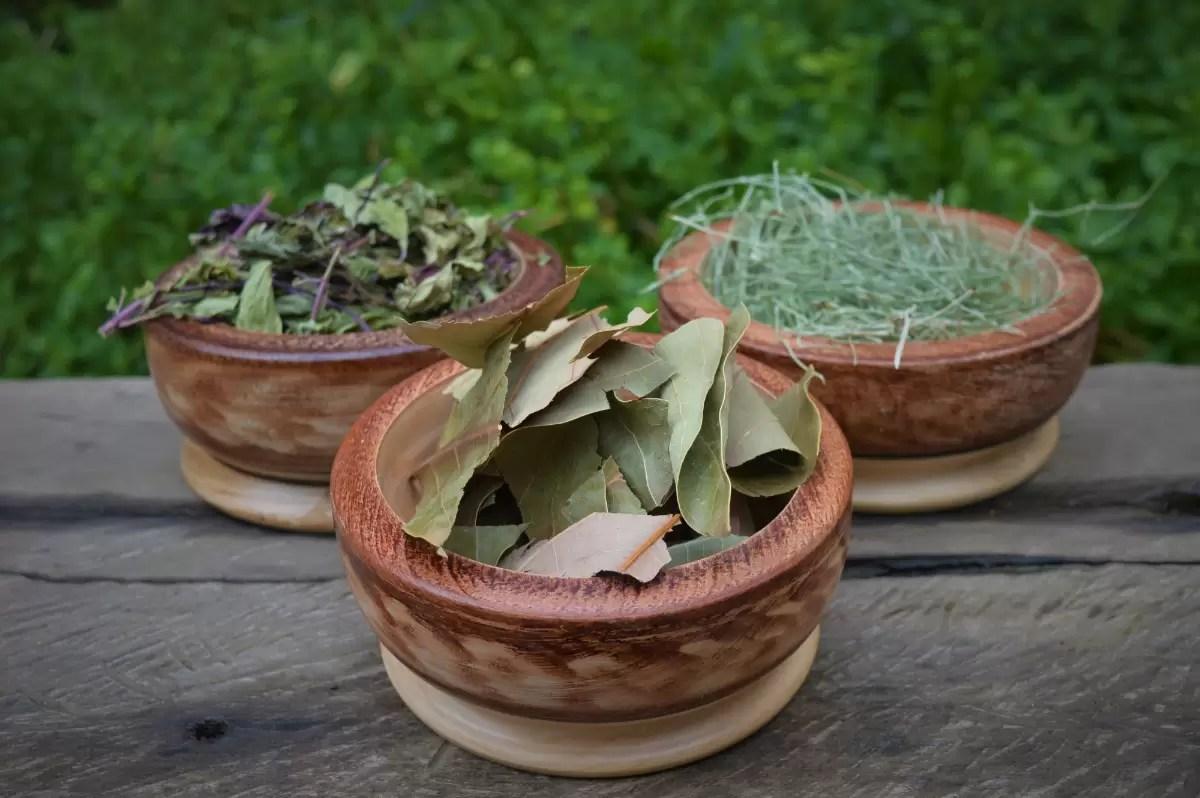SUS oferece cursos online sobre plantas medicinais e terapias complementares