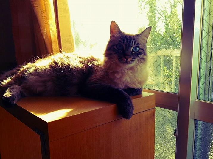 うちの猫 ブンタ