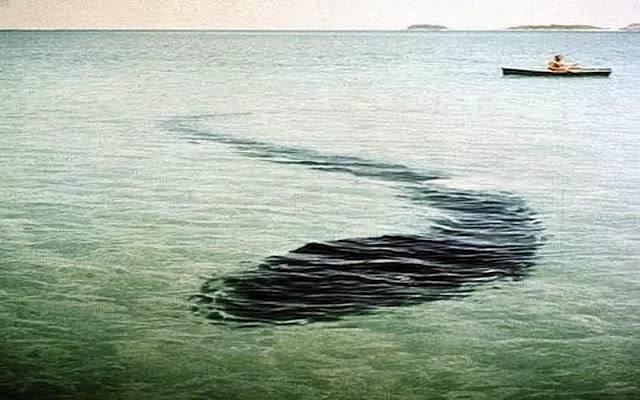 影ワニ|UMA(未確認動物)なのか妖魚なのか・・
