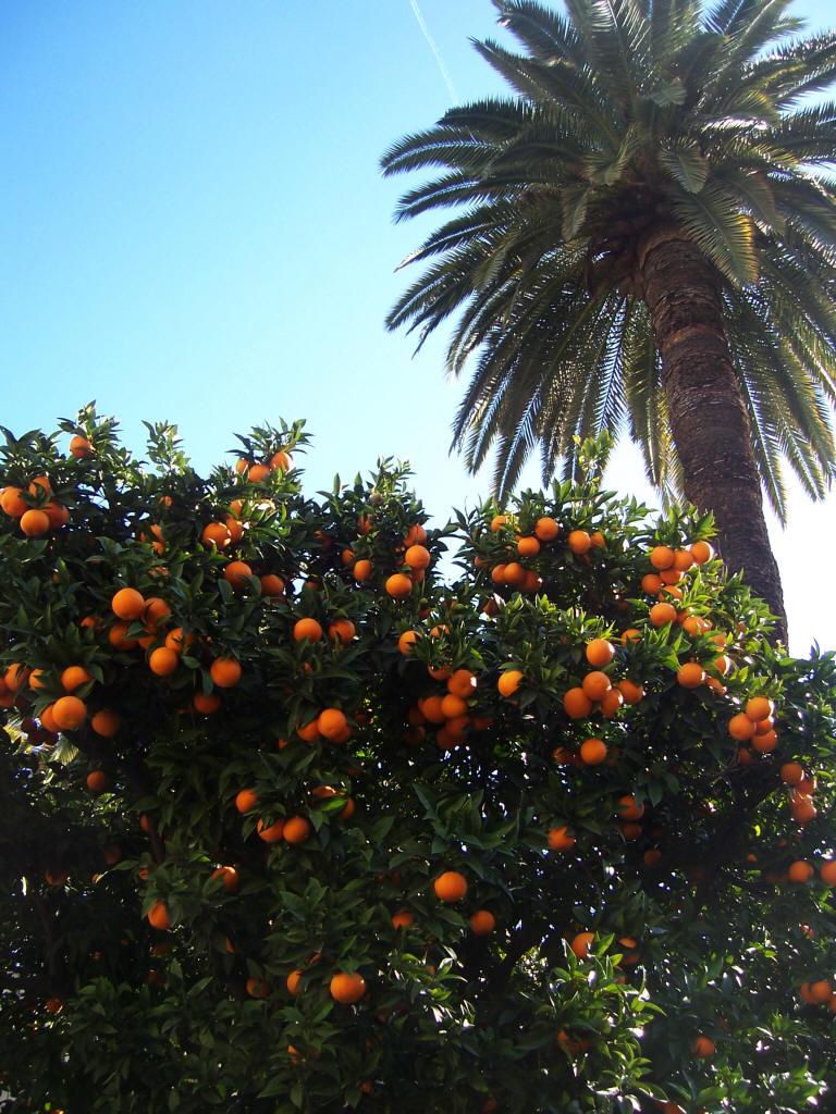https://i2.wp.com/jardinage.provence.free.fr/images/orange_jardinage.jpg