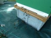les abeilles à la porte de la ruche