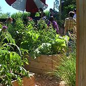 Un jardin de soin est porté par l'équipe, les patients, leurs familles. Nous proposons une conception partagée, des ateliers faciles, intergénérationnel.