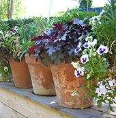 Aménager un potager accessible, des jardinières, améliorera l'ambiance de l'établissement. C'est un premier pas dans la reconquête des espaces extérieurs.