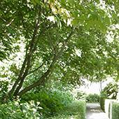 un jardin sensoriel pour vivre mieux et guérir plus vite.