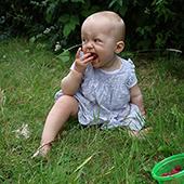 hêtre - jardin de soins : pour les particuliers, un jardin avec peu d'entretien, écologique et respectueux de l'environnement, il fait vivre chaque sens.