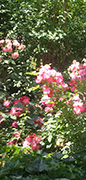 bertolotti-jardin-therapeutique-sensoriel