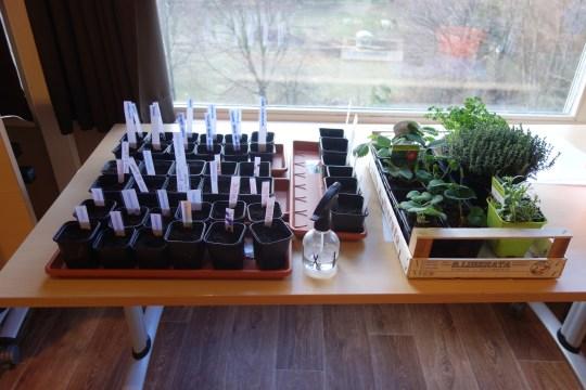 semis-ehpad-montéléger-jardinage-therapeutique