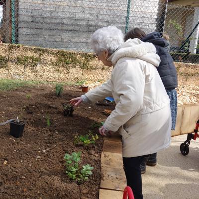 Jardin sensoriel de Sathonay-Camp : chaque résident peut toucher les herbes aromatiques, à bonne hauteur.