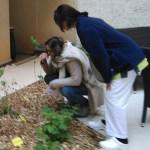 Formation-jardin-therapeutique-ehpad-lyon-jardin-des-hetres-découverte sensorielle