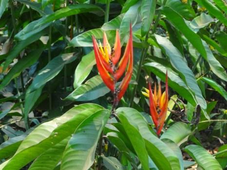 Striking flowers Lilongwe