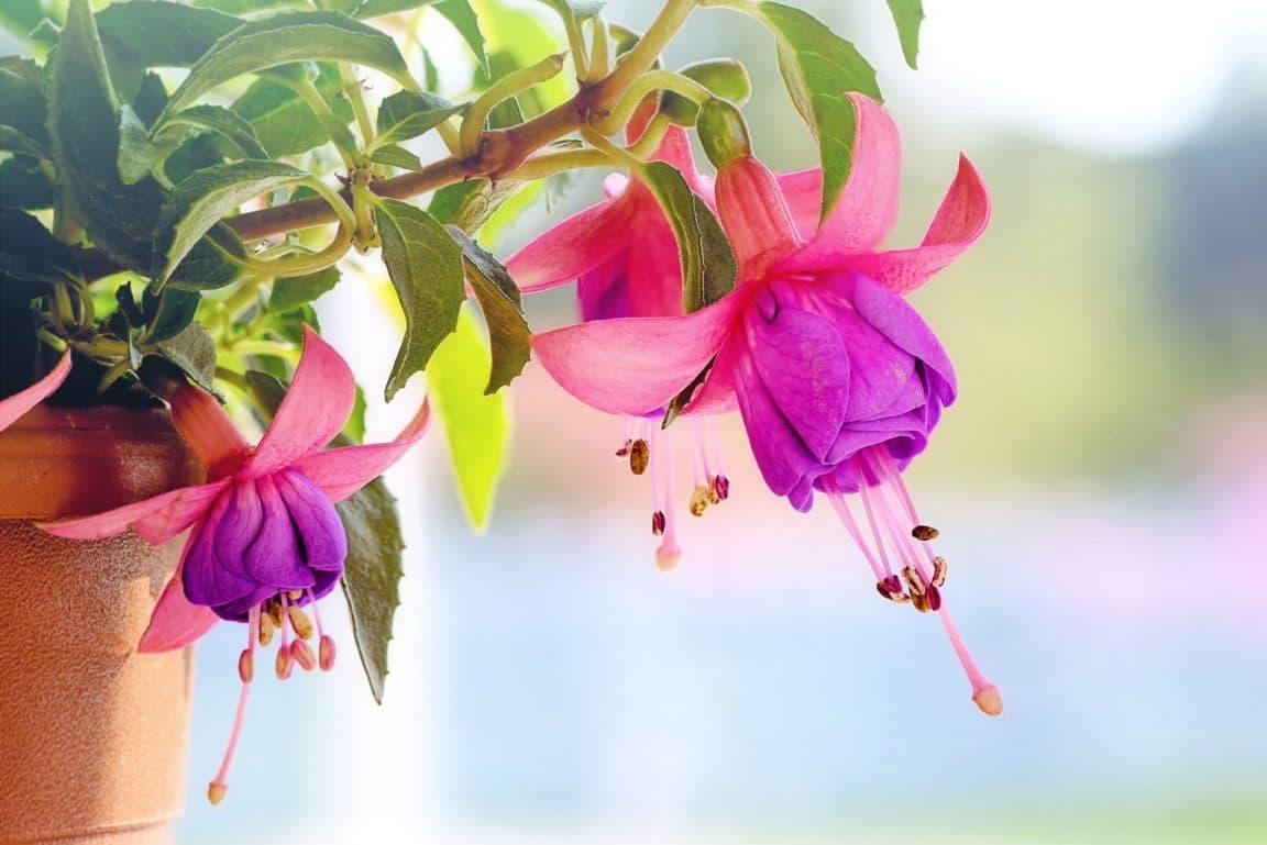 decouvrez 10 plantes retombantes tres