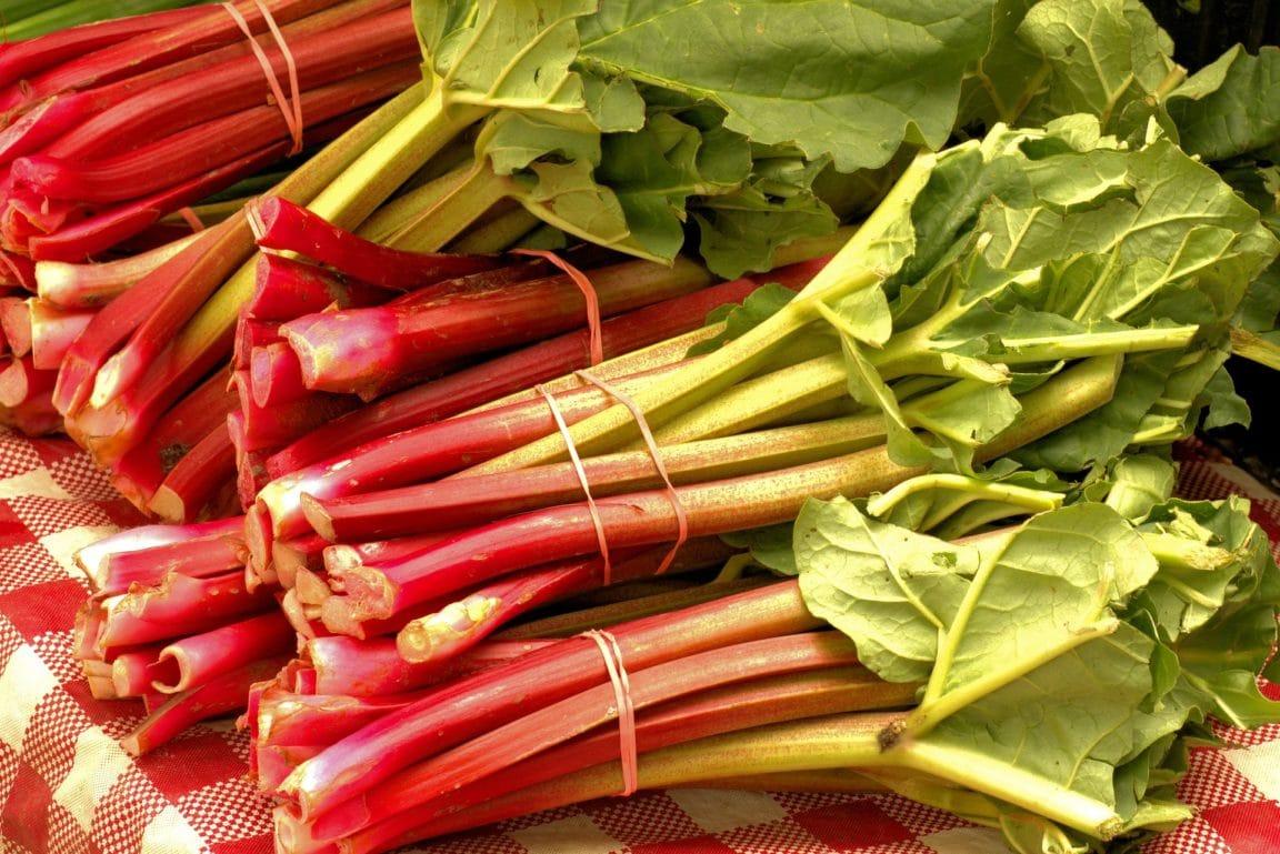 Comment Planter Cultiver Et Recolter La Rhubarbe