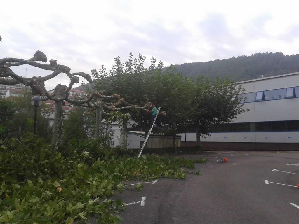 mantenimiento-jardin-empresa-20141011_090008