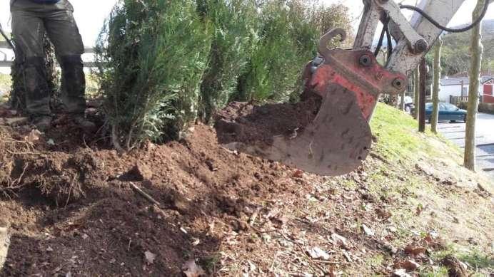 excavadora plantacion thuyas