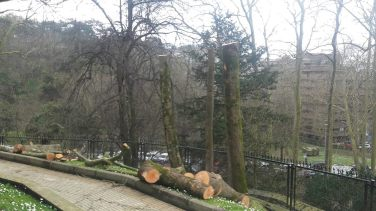 Poda en altura en Miraconcha Donostia