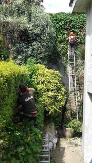 jardineritza lanak