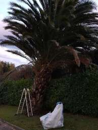 Tala palmera Donostia