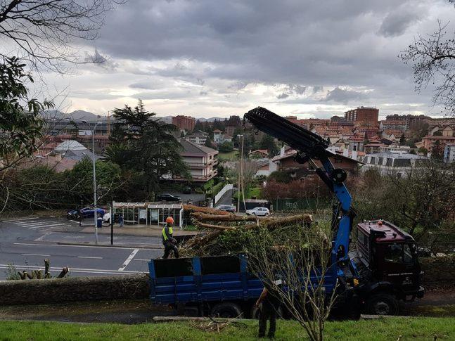 podas talas limpieza en Donostia 11