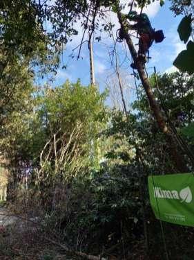 tala-de-arboles-Lugaritz-pasealekua