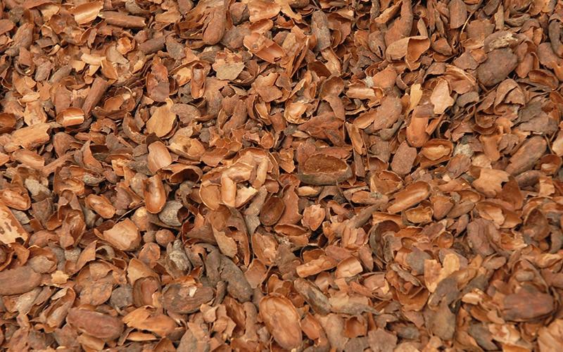 Les Coques Ou Cosses De Cacao Jardinerie Toulousaine