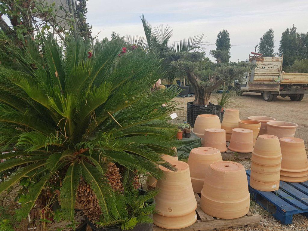 jardinerie des tropiques a muret et