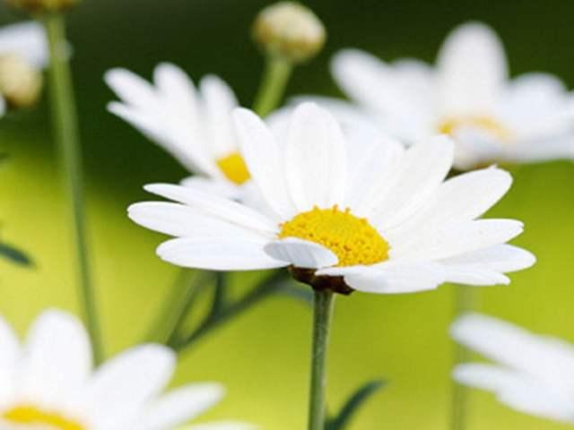 Jardines de la Abundancia – Allariz