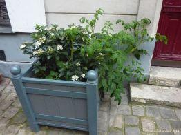 tomate viorne 2