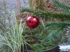Le sapin de Noël a aussi son fruit