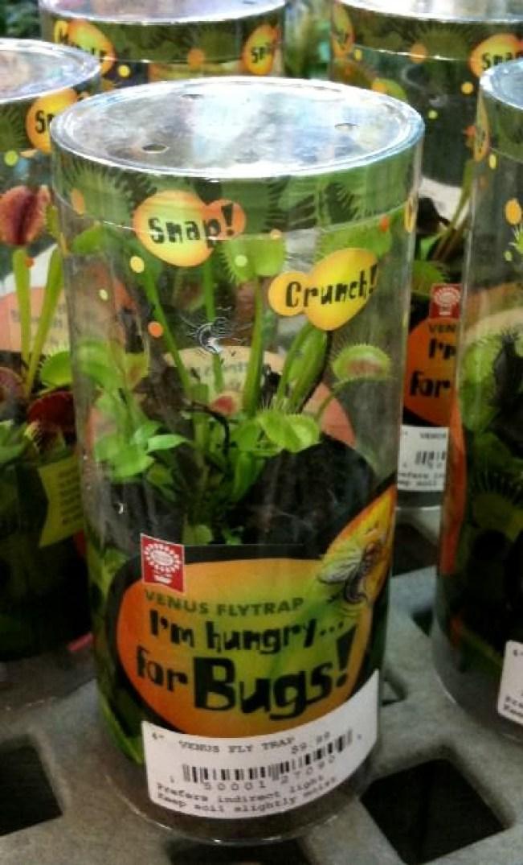 20171130K www.carnivorousplants.org.jpg